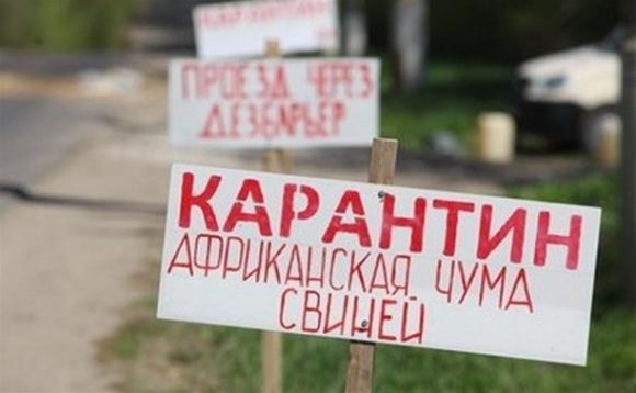АЧС в Хмельницкой области уничтожил 12,5 тыс. свиней фото, иллюстрация