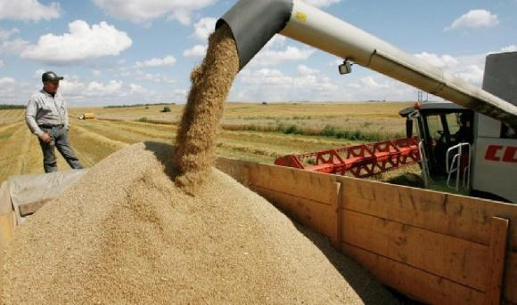 Жнива-2018: В Україні вже зібрано майже 35 млн тонн зерна фото, ілюстрація
