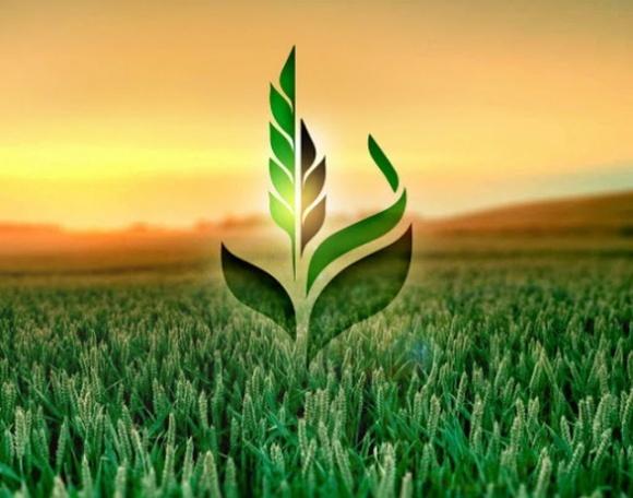 Аграрный фонд увеличил объемы закупок зерна для обеспечения продовольственной безопасности фото, иллюстрация