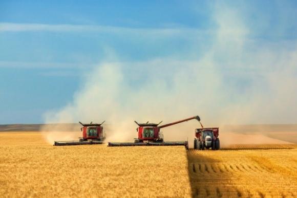 В Україні вже зібрали 36,7 мільйона тонн зерна фото, ілюстрація