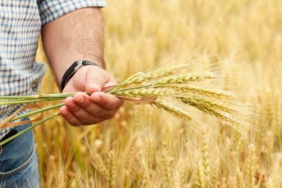 Банки зацікавлені у фінансуванні аграріїв під аграрні розписки фото, ілюстрація