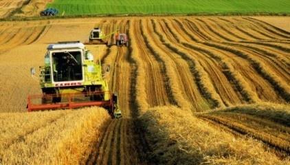 У 2018/19 сезоні світова площа сівби пшениці і далі знижуватиметься фото, ілюстрація