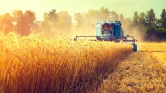 «Около 30% фермерских хозяйств юга уже свернули свою деятельность», — эксперт фото, иллюстрация