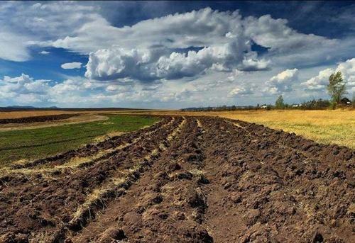 Найбільше пайової землі за 3.5 року продавали на сході та півдні України, найменше, — на заході фото, ілюстрація