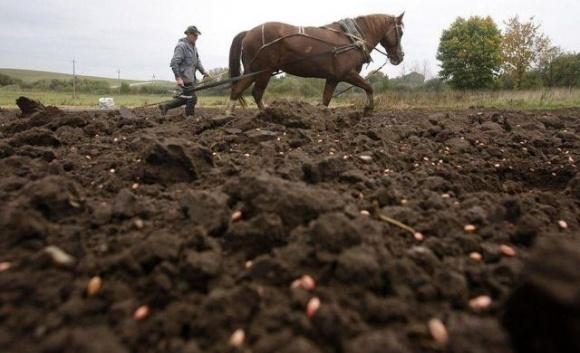 Не житница Европы, или почему в Украине невозможно построить аграрную сверхдержаву фото, иллюстрация