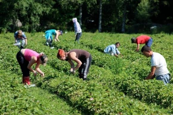 Как государство может зарабатывать на поддержке аграриев фото, иллюстрация