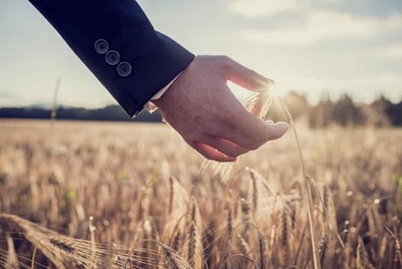 Страхование сельхозпроизводителей в Украине планирует развивать Нацбанк фото, иллюстрация