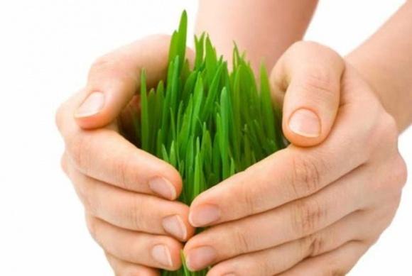 Правительство вводит эффективную систему агрострахования, — Петрашко фото, иллюстрация