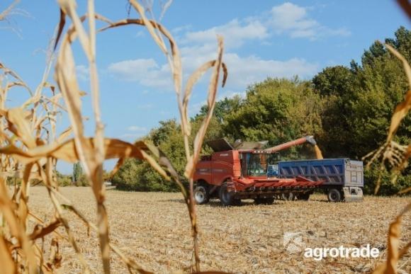 Группа АГРОТРЕЙД планирует увеличить площадь посевов под озимой пшеницей фото, иллюстрация