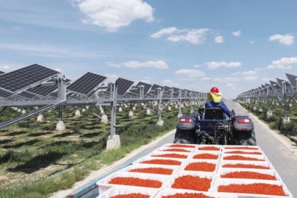 Гігантський проект агровольтаїки в Китаї фото, ілюстрація