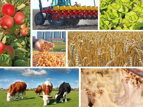 В Минагрополитике презентовали «Аграрное портфолио — 2021»  фото, иллюстрация