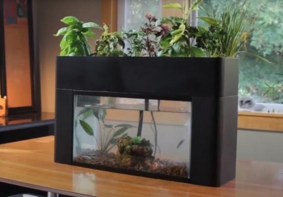 Разработчики создали теплицу-аквариум, в которой можно выращивать свежие травы и овощи круглый год  фото, иллюстрация