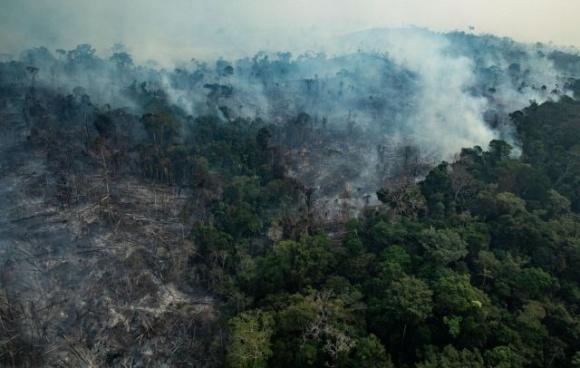 Ліси Амазонії перетворяться на посушливу рівнину фото, ілюстрація