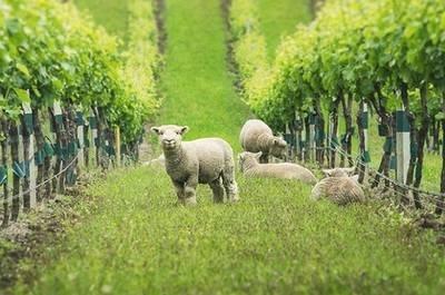 Держпідтримка потрібна не рослинництву, а тваринництву і виноградарству фото, ілюстрація