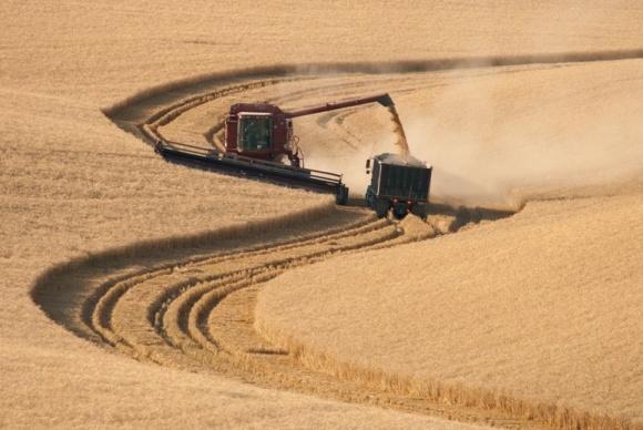 Размер земельного банка агрохолдингов и их количество в Украине ежегодно растут фото, иллюстрация