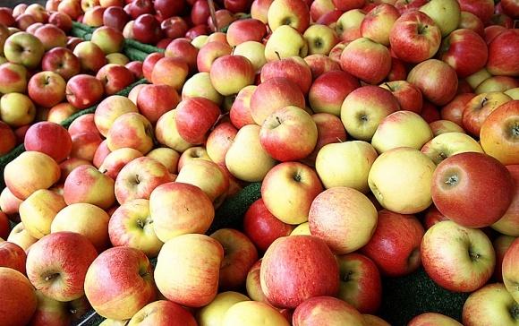 Експорт – найперспективніший канал збуту українських яблук фото, ілюстрація