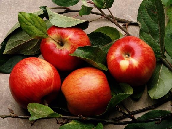 Заработать на яблоках в 2017-2018 сезоне удалось не всем фото, иллюстрация