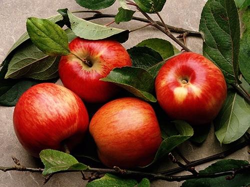 Польща вже імпортує свіже яблуко преміальної якості з України фото, ілюстрація