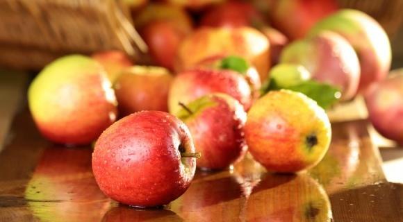 За 22 года площадь яблоневых садов сократилась в 3,5 раза фото, иллюстрация