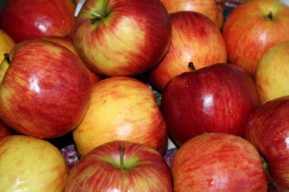 Найпопулярніші сорти українських яблук, які експортують в Азію фото, ілюстрація
