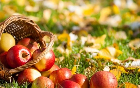 Украинцы предпочитают малоизвестные сорты яблок фото, иллюстрация