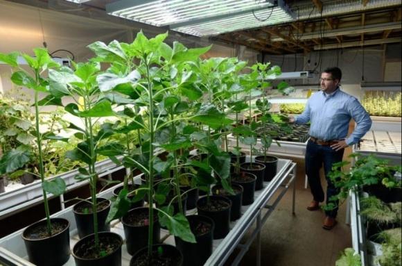 Наноудобрения позволяют собирать по два урожая в год фото, иллюстрация