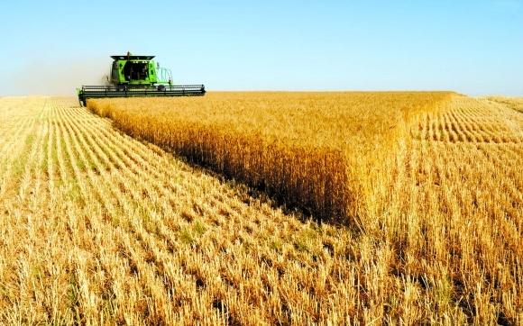 Аргентина существенно увеличивает производство и экспорт пшеницы фото, иллюстрация