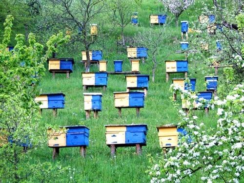 Методичні рекомендації щодо попередження отруєння бджіл: покрокові дії пасічника фото, ілюстрація