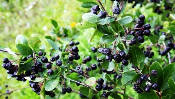 Органическое выращивание плодов, ягод и орехов приобретает в Украине популярность фото, иллюстрация