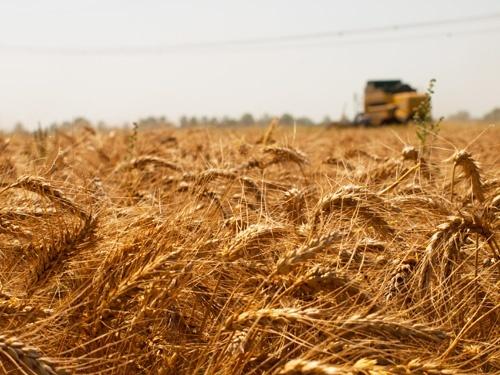 Український агроринок може рости на 20% в рік, - Бахматюк фото, ілюстрація