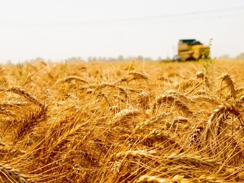 Украина усиливает контроль аграрного рынка фото, иллюстрация