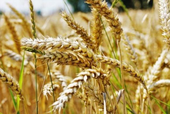 В некоторых областях зерновым и сое необходимо будет оздоровление посевного материала фото, иллюстрация