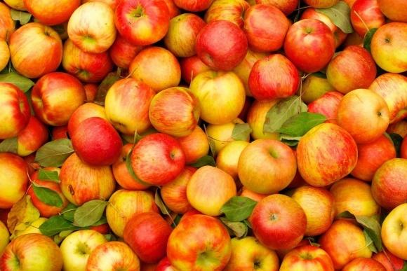 Малайзія чекає на українські яблука фото, ілюстрація