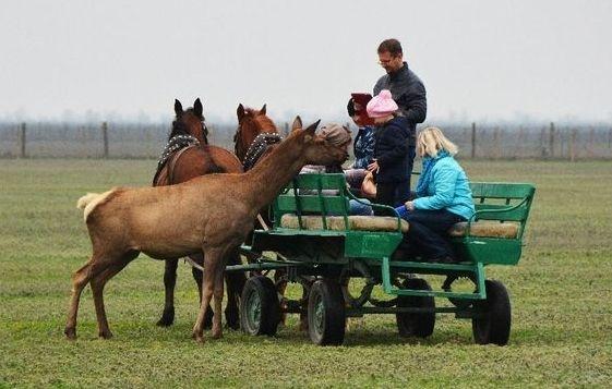 У 6-ти областях України створять агро-рекреаційні кластери фото, ілюстрація
