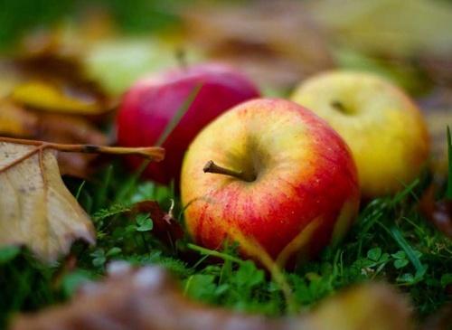 В Україні знову дешевшає яблоко фото, ілюстрація
