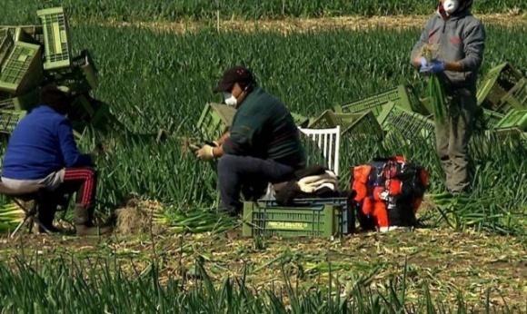 Австрійська прокуратура зайнялася фермером, який зачинив українців у примусовий карантин фото, ілюстрація