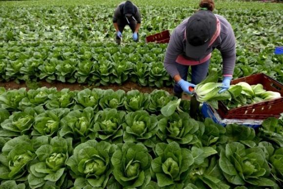 Как в Польше фермеры будут устраивать сезонных работников: условия фото, иллюстрация