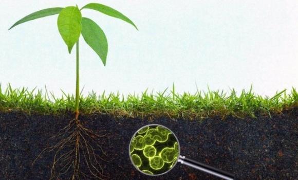 Зміна клімату впливає на якість ґрунту на Землі фото, ілюстрація