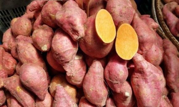 Сезон батату: як вирощують солодку картоплю в Україні фото, ілюстрація