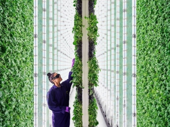 «Байєр» і Temasek відкривають інноваційну компанію з вертикального землеробства фото, ілюстрація