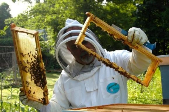 Николаевская область — лидер по сертификации органического пчеловодства: как получить органик-сертификат? фото, иллюстрация