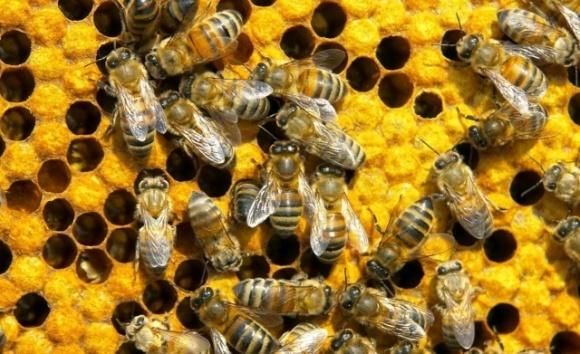 В Україні розробили систему захисту пасік від хвороб та отруєнь бджіл фото, ілюстрація