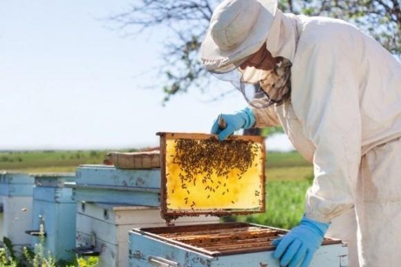 Благодаря юридической поддержке, пчеловодам Одесской области удается сократить случаи отравлений пчел фото, иллюстрация
