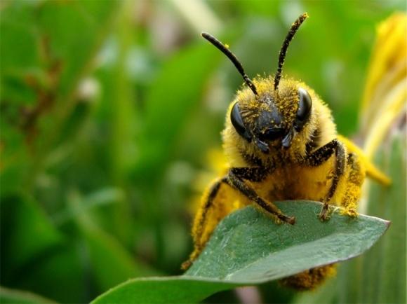 Підготовлено пам'ятку про запобігання отруєння бджіл пестицидами фото, ілюстрація