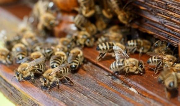 Отравление пчел: ситуация повторяется фото, иллюстрация