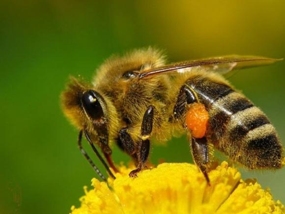 Специалисты компании BASF напоминают о том, как применять СЗР, не вредя пчелам фото, иллюстрация