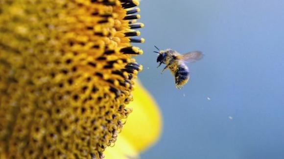 Аргентинские ученые нашли способ как управлять пчелами, повышая урожай фото, иллюстрация