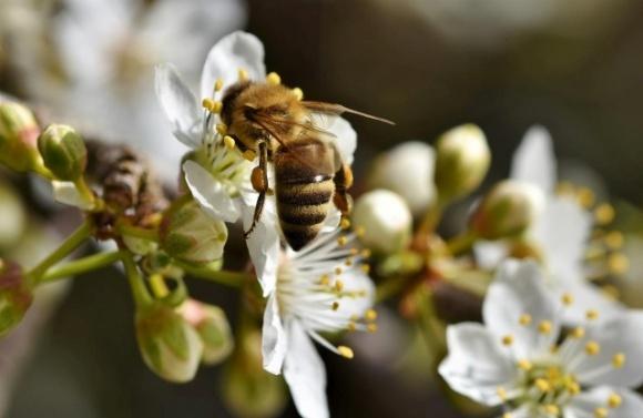 «Геноцид пчел»: в Луцке утвердили правила применения пестицидов на территории общины фото, иллюстрация
