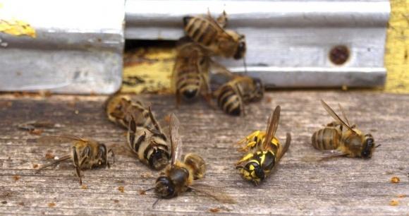 В США мільйони бджіл загинули через вірус Зіка фото, ілюстрація