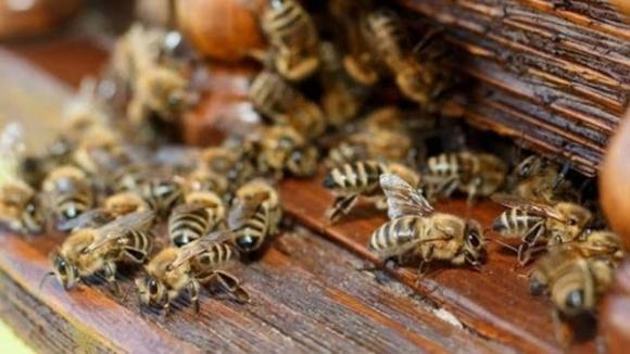 В Польше выясняют причины гибели более 1 млн пчел фото, иллюстрация